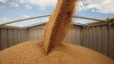 Grain bucket elevator is an exemplary work quality!