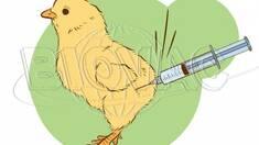 """Вакцини """"Біовак"""" - ефективна профілактика сільськогосподарської птиці"""