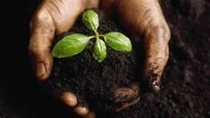 Добрива для кімнатних рослин - запорука їх краси і Вашого гарного настрою!