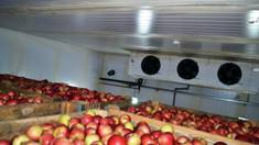 Чому варто купити холодильне обладнання для овочесховища в українського виробника?