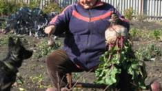Секрети надзвичайних урожаїв городини