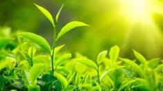 Живлення та ріст рослин