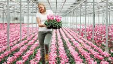 Osmocote Bloom: спеціально для однорічних, балконних рослин