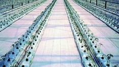 Агротканина для теплиць: переваги її використання.