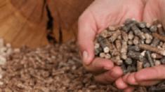 Види сировини та оптимальне обладнання для гранулювання: особливості вибору