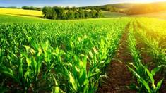 Сівалка для посіву кукурудзи: особливості та переваги застосування!