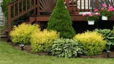 ТОП 7 декоративных кустарников для сада