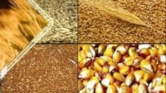 Для чего нужно купить фуражное зерно и где его использовать?