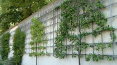 Преимущества выращивания плодовых деревьев обойным методом