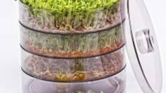 Проращиватель для семян: какова его польза и особенности?