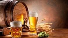 Как подобрать оборудование для точки по разливу пива