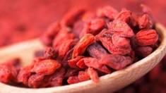 Выращивание ягод годжи - новый прибыльный бизнес