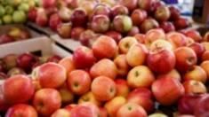 Яблоки на переработку: что можно приготовить и на что обращать внимание