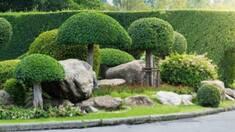Декоративні рослини в ландшафтному дизайні