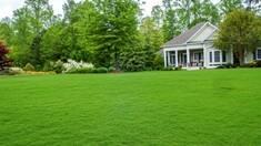 """Эффективная и нетребовательна трава """"лилипут"""" - гарант привлекательный вид Вашего участка"""