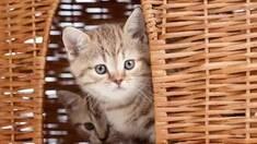 Выбираем домик для кошки
