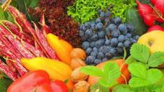 World Bank to support creation of fruit cooperative in Ukraine