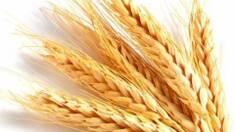 Час купувати сертифіковане насіння!