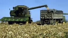 Урожайность кукурузы в Украине значительно снизилась
