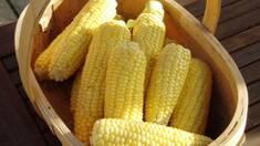Посевной материал кукурузы и подсолнечника по цене 2011 года