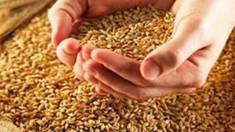 Увага! Господарство «МТД» оновило асортимент. Тепер ще більше сортів насіння!