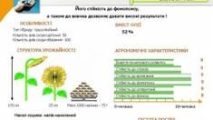 Снижена цена на гибридные семена подсолнечник Жалон! Спешите заказать до окончания акции!