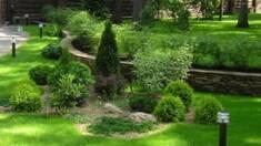Открылся интернет-магазин уникальных декоративных растений