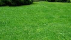 """Неприхотливый газон устойчив к засухе от компании """"Агро Мир"""""""