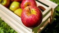 В Украине будет дефицит яблок