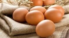 В мае экспорт украинских яиц увеличился на 60%