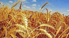 Украина выходит в лидеры среди стран-аграриев