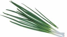 Зеленый лук приносит самый высокий доход