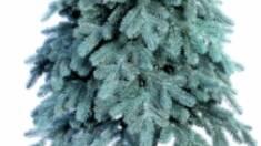 Искусственные елки «Квазар» стали победителями украинских и международных конкурсов новогодних декораций