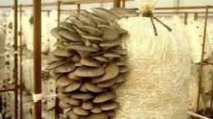 Оновлення послуг! У нас Ви можете покроково дізнатись як вирощувати гливи!