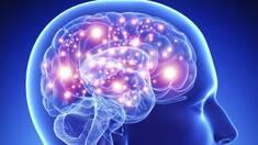 Есть ли предел возможностей человеческого мозга?