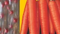 Скидка 50% на семена моркови на водорастворимой ленте !!!