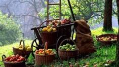 Стало известно, что листья ореха способно сохранить ваши яблоки!