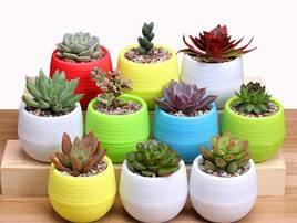 Горщики та аксесуари для хатніх рослин