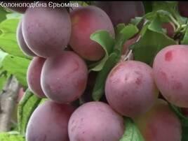 Плодово-ягідні дерева, загальне