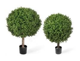 Рослини для дому і саду
