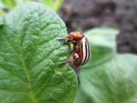 Засоби захисту рослин від шкідників