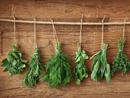Насіння пряних трав і рослин