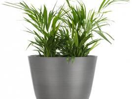 Искусственные растения, общее