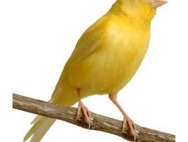 Домашні птахи