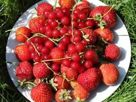 Разные фрукты и ягоды