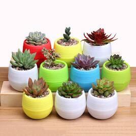 Горшки и асессуары для домашних растений