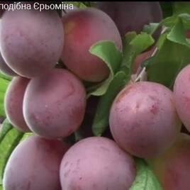 Плодово-ягодные деревья, общее