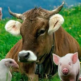Тварини та продукція тваринництва