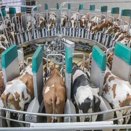 Оборудование для животноводства, птицеводства, пчеловодства, заготовки