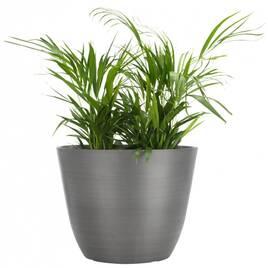 Штучні рослини, загальне
